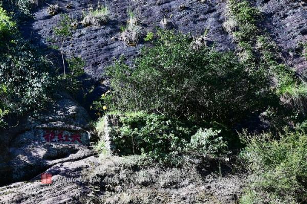 武夷山风景名胜区