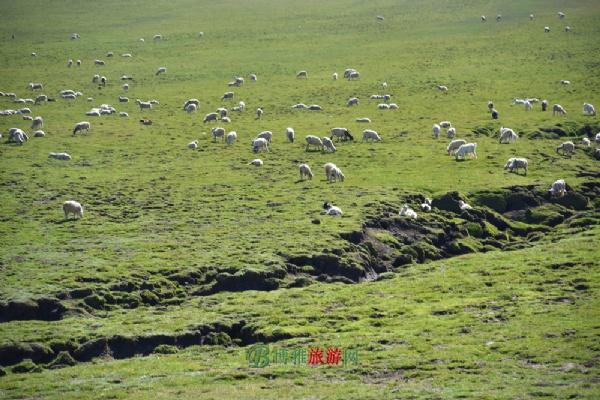 阿拉尔草原